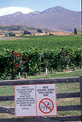 Pacific islands, new zealand, south island, otago, central otago, vineyard, vineyards, wine, wine industry, agriculture, rural, rural scene, rural scenes, grapevine, grapevines, sign, signs, phylloxera, gate, gates, circle, circles, circular, grape phylloxera, daktulosphaira vitifoliae, fitch, pest, pests, plant pest, plant pests.