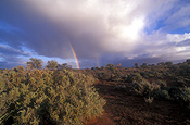 Australia, climate, weather, cloud, clouds, sky, skies, storm, storms, storm cloud, storm clouds, rainbow, rainbows, tree, trees, outback, australian outback, outback australia, desert, deserts, vegetation.