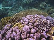 Thailand, Coral, Underwater, Marine, Fish, Surin, Islands