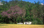 Australia, queensland, QLD, caravan, caravans, car, cars, transport, transportation, vehicle, vehicles, heifer, toowoomba, great dividing range, tree, trees.