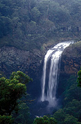 Australia, New South Wales, forest, forests, tree, trees, ebor, ebor falls, waterfall, waterfalls, guy fawkes, guy fawkes np, guy fawkes national park, national park, national parks, running water, LM19,
