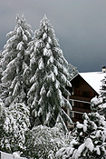 Europe, switzerland, swiss, alps, swiss alps, mountain, mountains, villars, chalet, chalets, resort, resorts, snow, snow scene, snow scenes, winter, winter scene, winter scenes, cold, christmas tree, christmas trees. PH44,