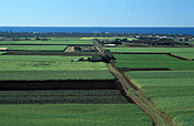 Farming, Farmland, farm, farms, Australia, Qld, Queensland, sugar, sugar cane, sugar cane field, sugar cane fields, rural, rural scene, rural scenes, bagara.
