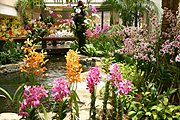 Flower, flowers, orchid, orchids, singapore, singapore orchid, singapore orchids, airport, airports, singapore airport, changi, changi airport, pond, ponds, garden pond, garden ponds, waterfeature, waterfeatures.